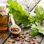 Healing power of English Oak