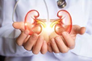 Kidneys Author: Gella