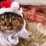 Letter to Santa Claus. Author: Galina Chernaya.
